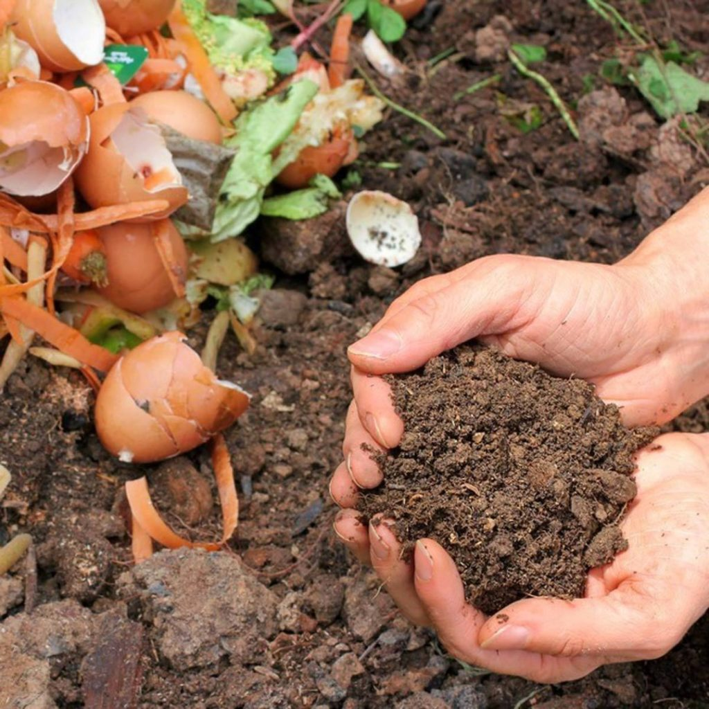 Rethinking Food Waste