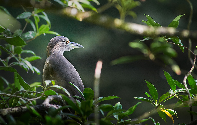 IUCN Red List Species Conservation